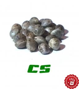Graines de cannabis CS ca.25 Pièces