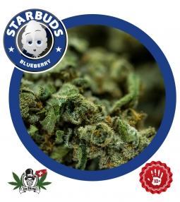 Starbuds Blueberry Indoor