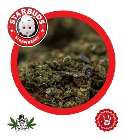 Starbuds Strawberry Indoor 2.0