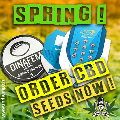 Order CBD seeds now