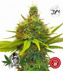 JYM's Geenie CBD Seeds