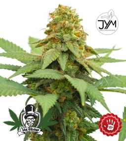 JYM's Big Berry CBD Seeds
