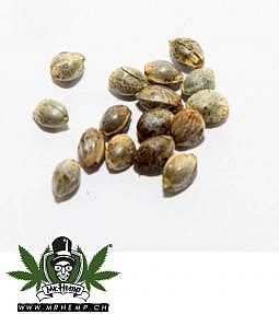 BGG CBD seeds Blueberry 50 pcs